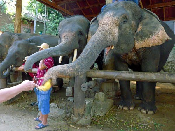 elephant40b-1229