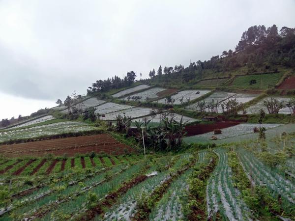 ※この標高の斜面を使っての畑作地帯が広がっている。