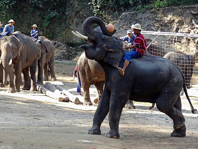 タイのチェンマイ郊外にあるエレファントキャンプ