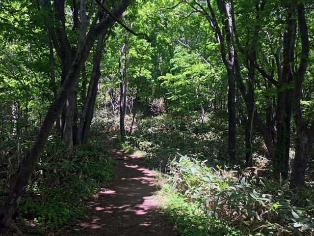 藻岩山の特徴である原生自然のトレール