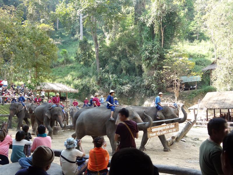 ゾウ使いの人達とゾウとの信頼感。